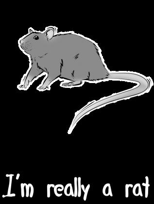 koszulka ze szczurem szczur szczurek dla szczurów