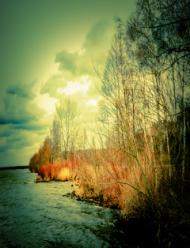 Kubek - Trzciny nad jeziorem.