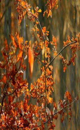 Torba z liśćmi