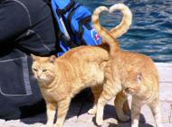 tumblr cats love heart