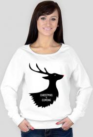 Christmas is coming - damska bluza świąteczna