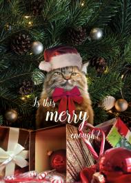 Plakat święta, kot, grumpy cat