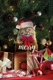 Etui święta, kot, grumpy cat, merry