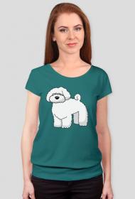 Kolorwa damska koszulka - Maltańczyk