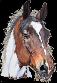 srokaty koń