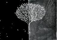 Koszulka męska - Czarno-białe Drzewo