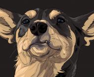coviddog