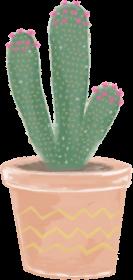 Kaktusowy kubek 1