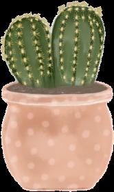 Kubek kaktus 2