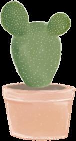 Kaktus 3