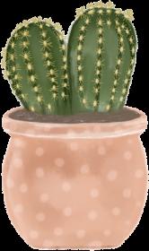 Kaktusowa poszewka 3