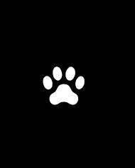 CAT SIDE