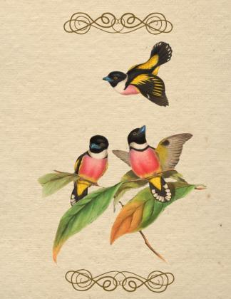 Kubek (Ptaszki)