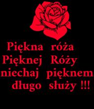 Róza piękna