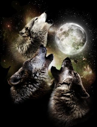 Młody wilk ( ͡~ ͜ʖ ͡°)