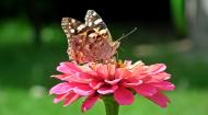 Kolorowa maseczka ochronna wielokrotnego uzytku Motyl 2
