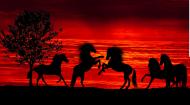 Kolorowa maseczka ochronna wielokrotnego uzytku Zachod slonca Konie 2
