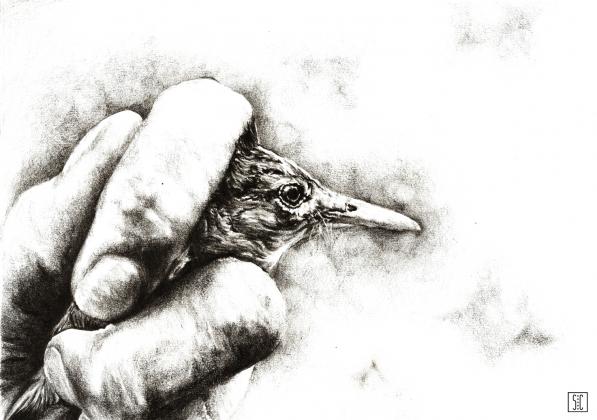 Ptak - plakat