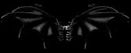 Czarne skrzydła