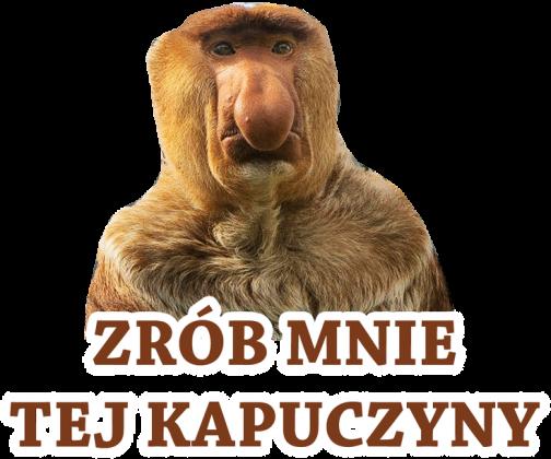 KAPUCZYNA - KOSZULKA DAMSKA KOLOR