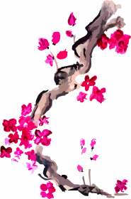Bluzka Kwiaty Wiśni