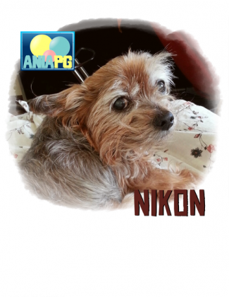 AniaPG Favorite Pets Nikon 23 - podkładka pod mysz