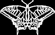 Motyl 01 - white - m