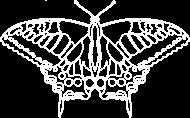 Motyl 01 - white - d