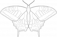 Motyl 01