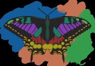 Motyl 03