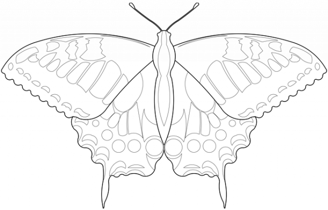 Motyl 01 - m