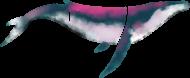 Wieloryb whale