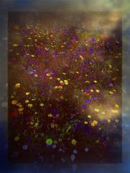 Torunia kwiat