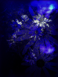Kwiat Torunia niebiesko komin