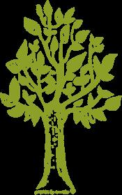 Kangurka męska z drzewem, drzewo bluza z kapturem