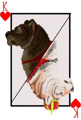 Tiger King bluza (M)