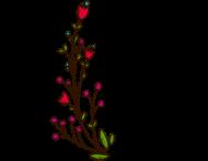 KOSZULKA KEEP GROWING COTTON PREMIUM