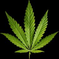 Maseczka Marihuana