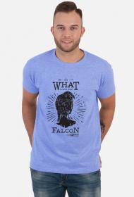 Falcon man