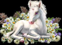 Magiczny kubek Jednorożec Unicorn