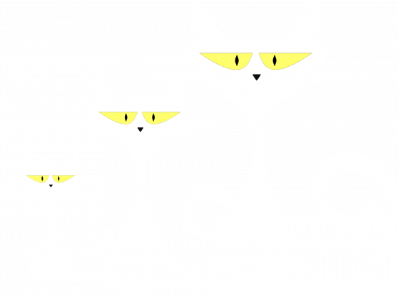 Kot biały sztuk trzy