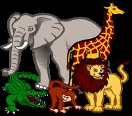 Worek szkolny Zoo