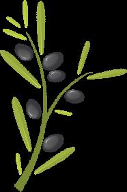 Fartuch z gałązką oliwną
