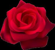 KOSZULKA ROSE M WHITE