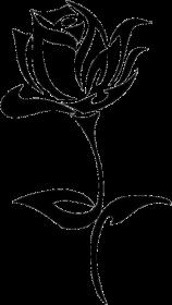 BLUZA ROSE W WHITE B
