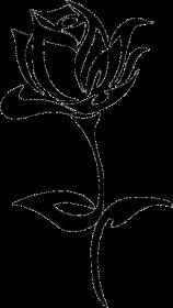 KOSZULKA ROSE W WHITE B