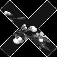 KOSZULKA X W WHITE