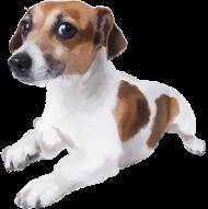 Jack Russell Terrier  Torba z Twoim Psem