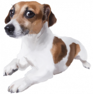 Jack Russell Terrier  kubek z Twoim Psem