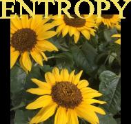 BLUZECZKA entropy #1.